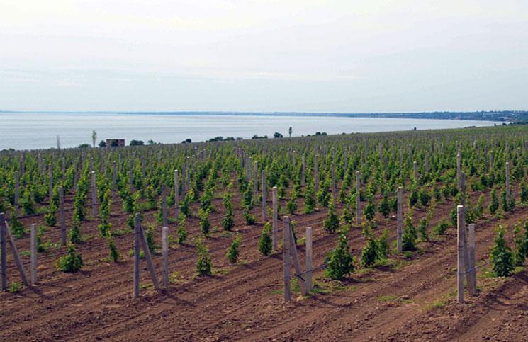 Выюор места для посадки виноградника