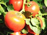Здоровые семена