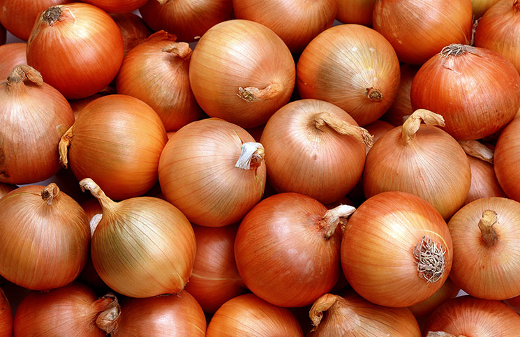 Здоровая луковица