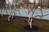 Готовим деревья к весне