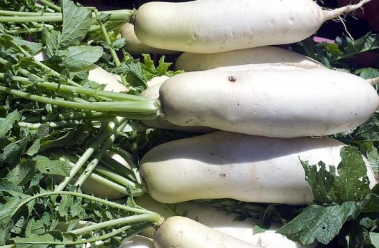 Дайкон выращивание из семян 315