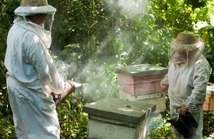 Пчеловоды в работе