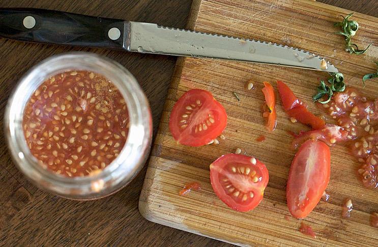 Как собрать семена с помидор на рассаду