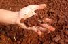 Что такое кислотность грунта, и как ее определить подручными средствами?
