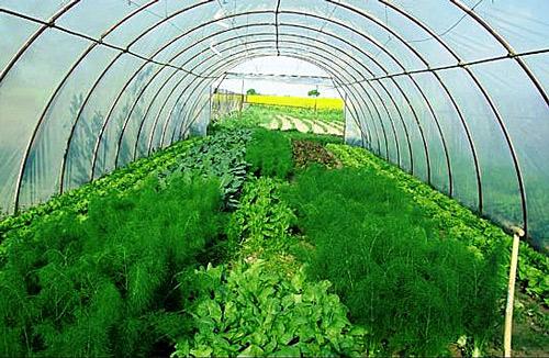Выращивание овощей в теплицах как бизнес 41