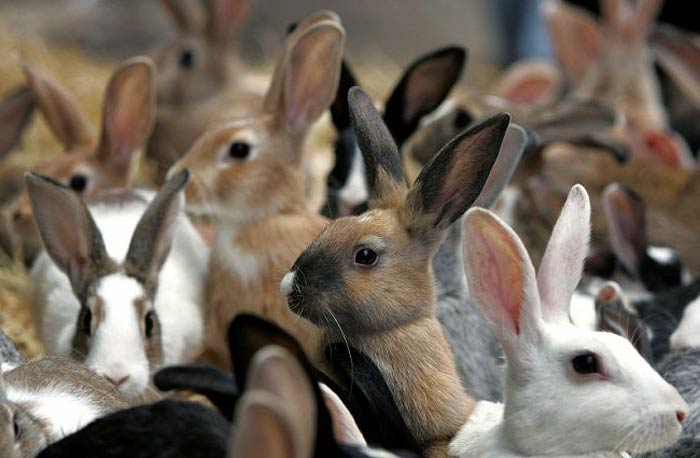 Кормление кроликов в домашних условиях: что должно входить в 35