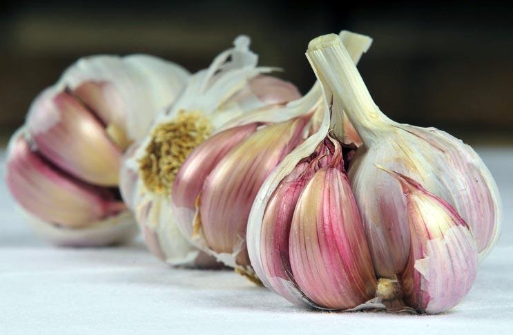 Способы выращивания чеснока