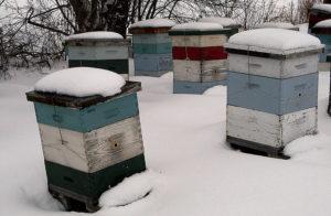 Уход за пчелами в зимовнике