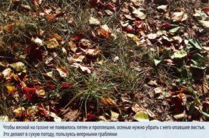 Осенью нужно убрать опавшие листья