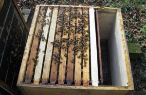Что наиболее важно в подготовке пчел к зимовке?