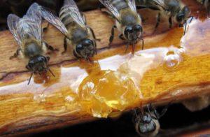 Стоит ли заменять пчеломаток в августе-сентябре