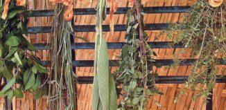 Уборка и хранение пряных растений