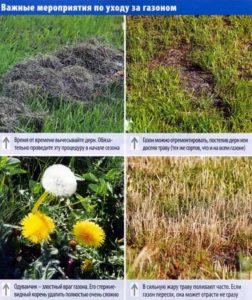 Важные мероприятия по уходу за газоном