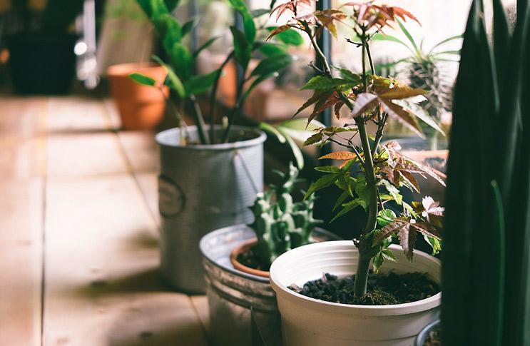 Уход в домашних условиях за растениями 79