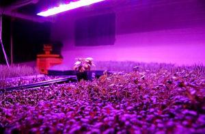 LED-лампы для рассады