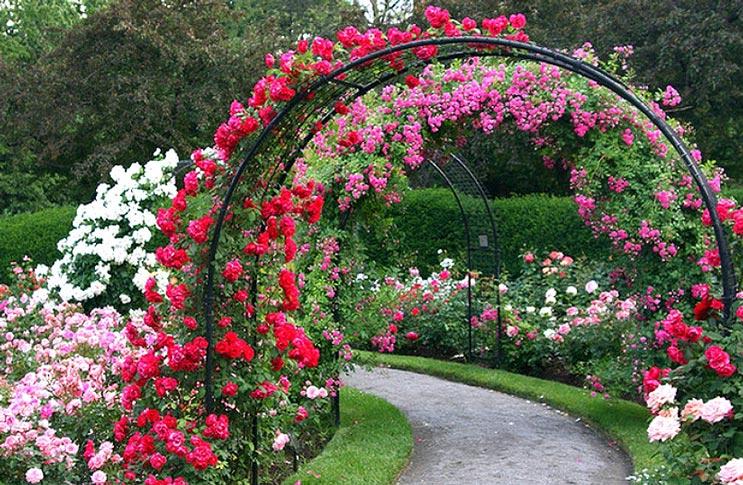 Арка плетущейся розы как сделать