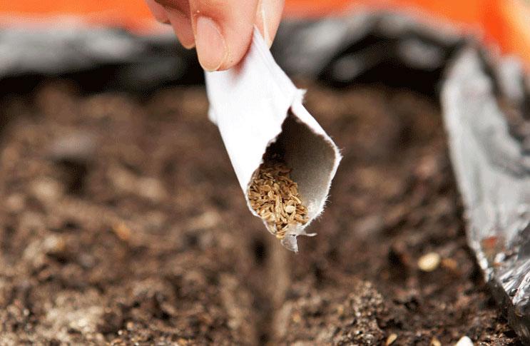 Картинки по запросу Посадка семян моркови