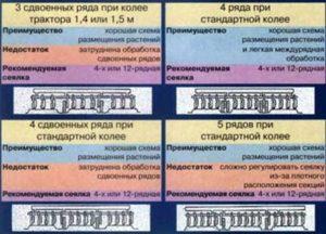 Таблица посадки лука