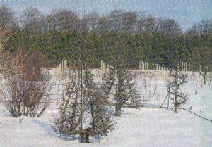 Формовой сад зимой