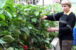 Борьба с муравьями с помощью растений