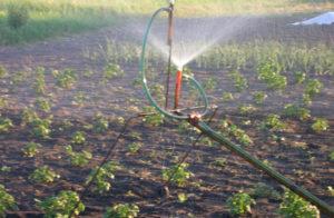 Полив огорода в жару