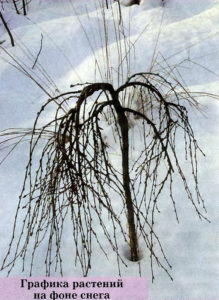 Графика растений на фоне снега