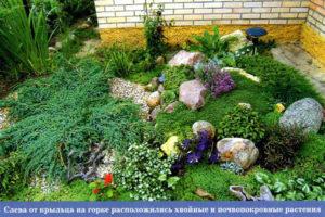 Хвойные и почвопокровные растения