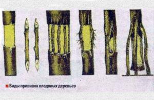 Виды прививок