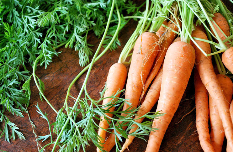 Влажность моркови и порошка моркови