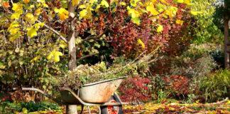 Что делать в саду в сентябре?