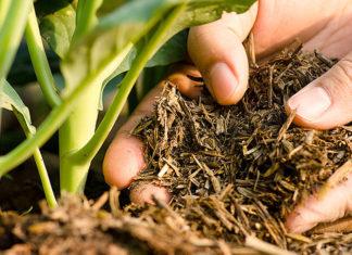 Какие удобрения вносить в почву осенью