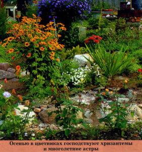Хризантемы и астры