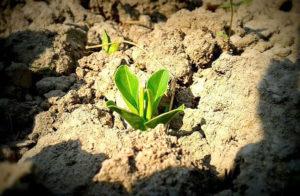 Кислотность почвы - как определить?